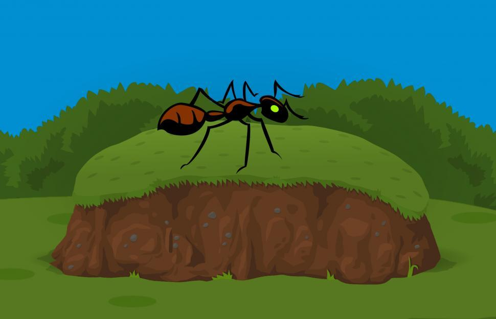 Download Free Stock HD Photo of Ant in garden  Online