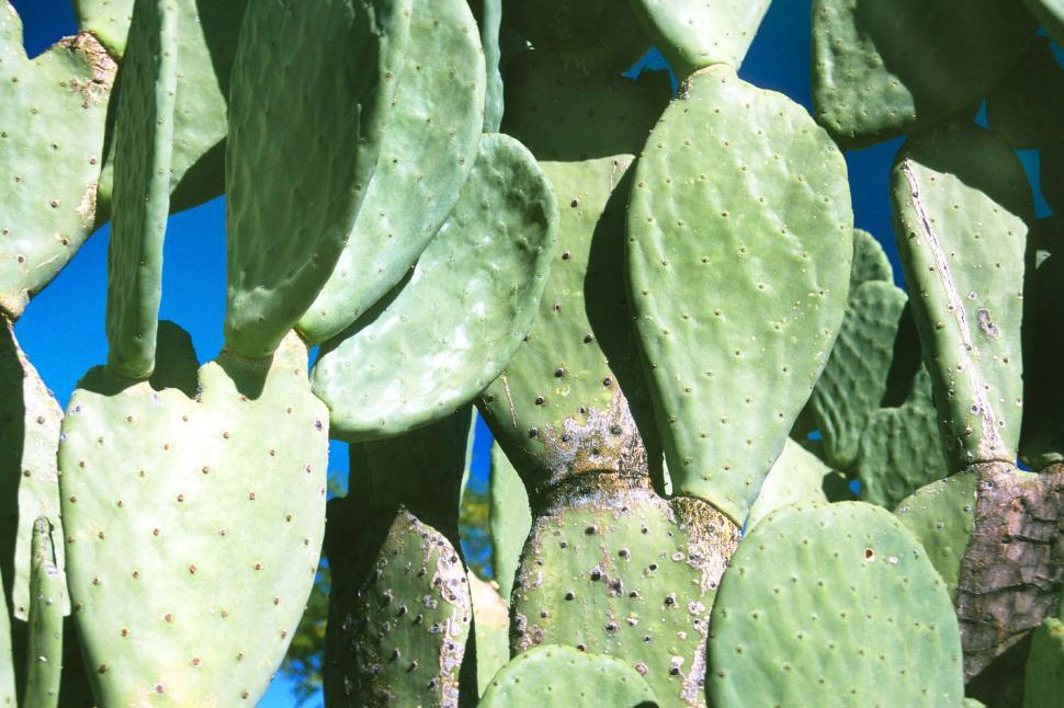 Download Free Stock HD Photo of Green Cactus Pads Online