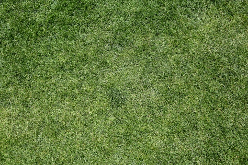 Download Free Stock Photo of Green Grass Texture Full Frame