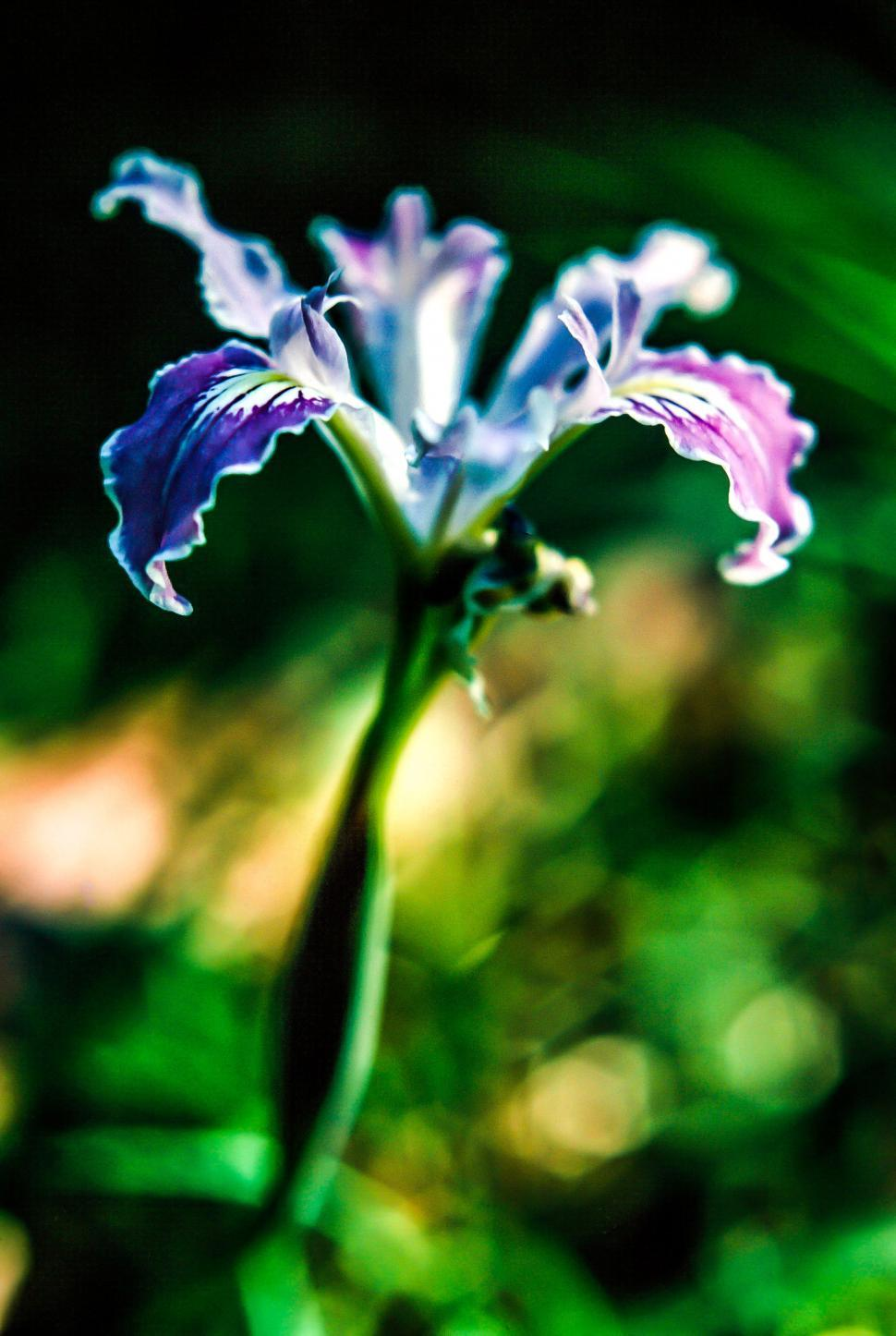 Download Free Stock Photo of Selective Focus on blue flower