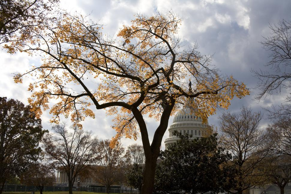 Download Free Stock Photo of Fall Colors at US Capitol