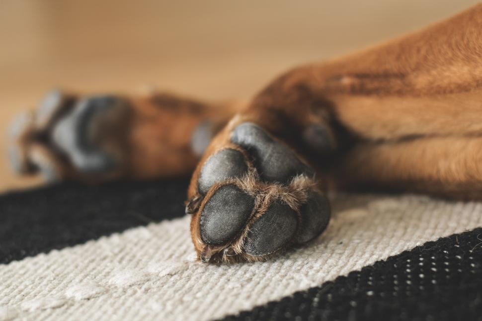 Download Free Stock HD Photo of Puppy Paws Online