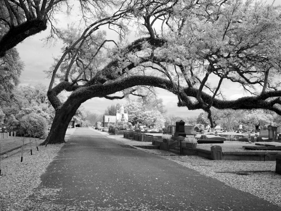 Download Free Stock Photo of Road in Cemetery