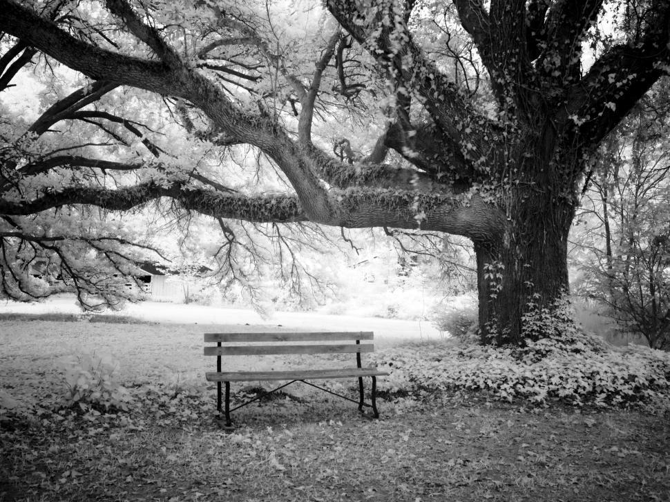 Download Free Stock Photo of Empty Park Bench