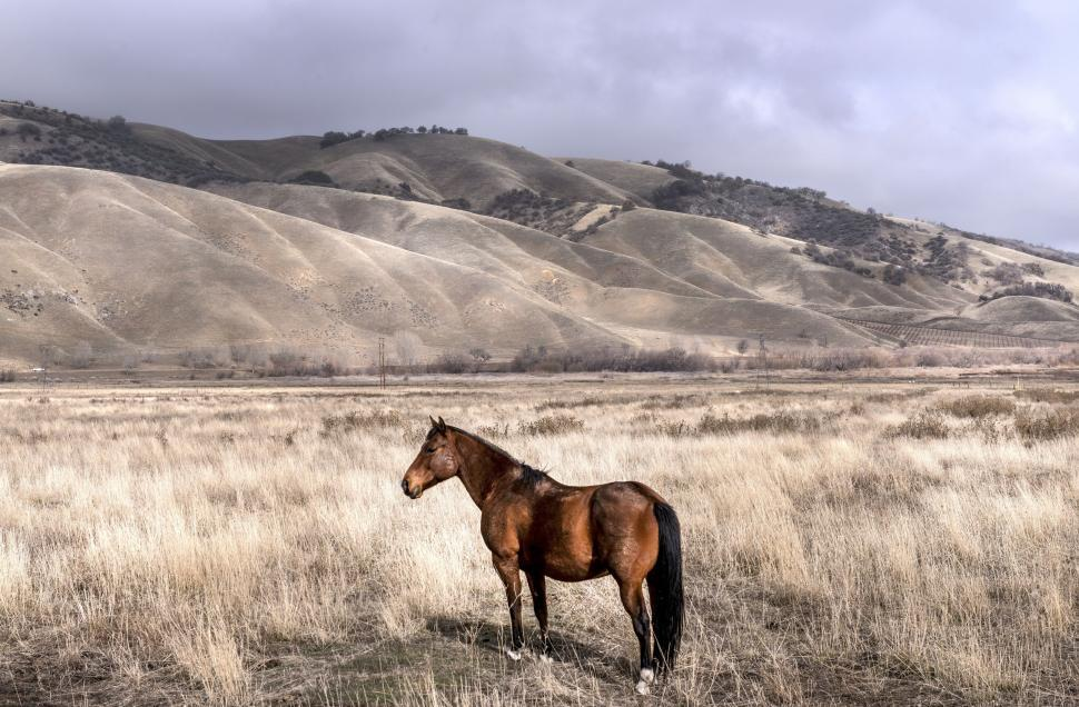 Download Free Stock HD Photo of One Horse in Prairie Online