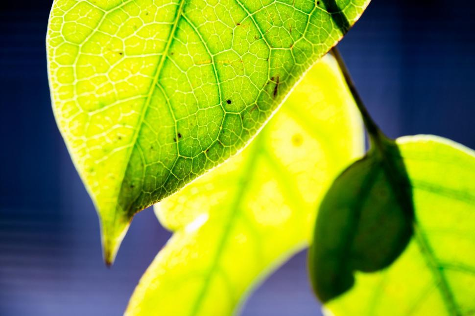 Download Free Stock Photo of Sunlight on Green Leaf