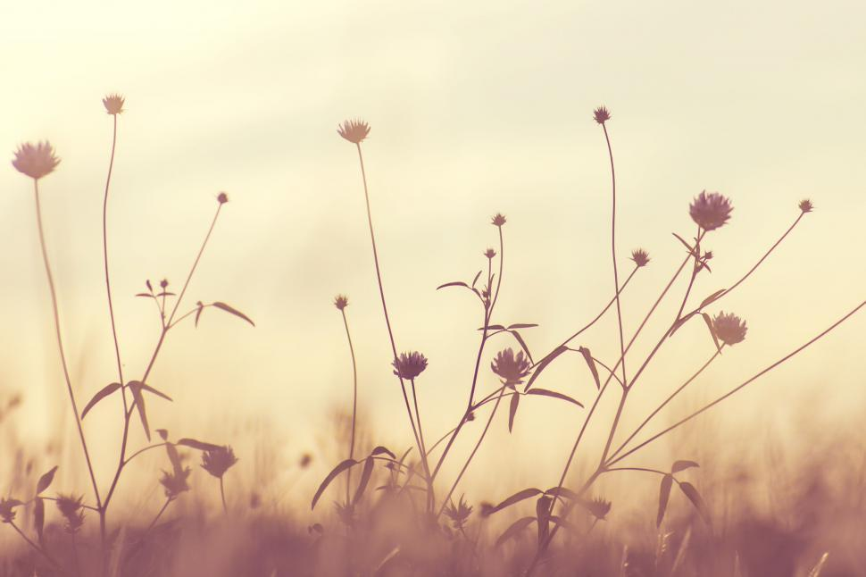 Download Free Stock Photo of Blooming Flowers - Sepia