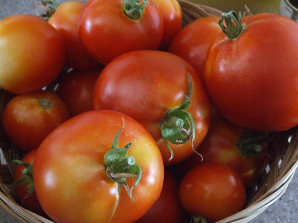 Download Free Stock HD Photo of Garden Tomatos Online