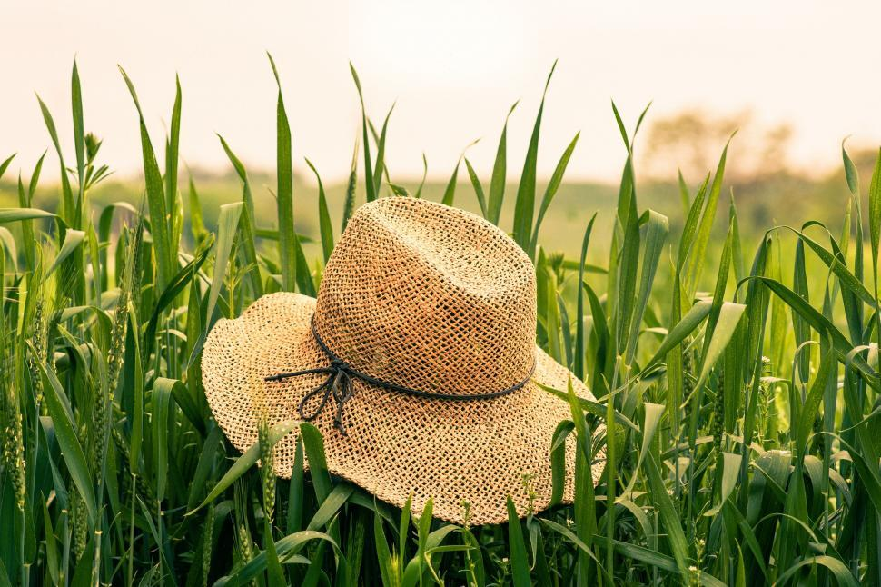 Download Free Stock Photo of Hat on Grass