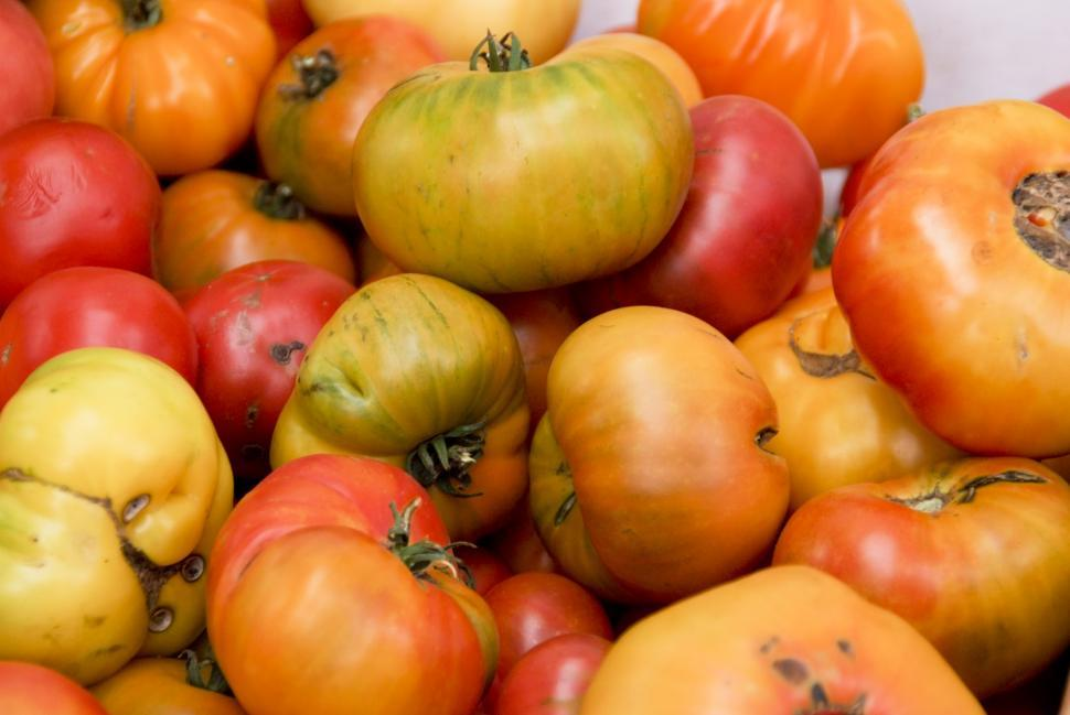 Download Free Stock HD Photo of Heirloom Tomatoes Online