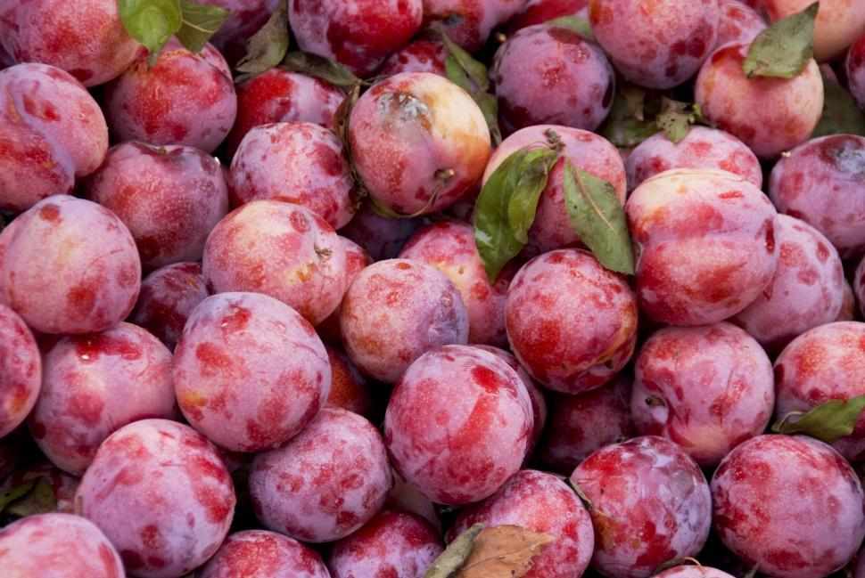 Download Free Stock HD Photo of Fresh From The Farmes Market Online