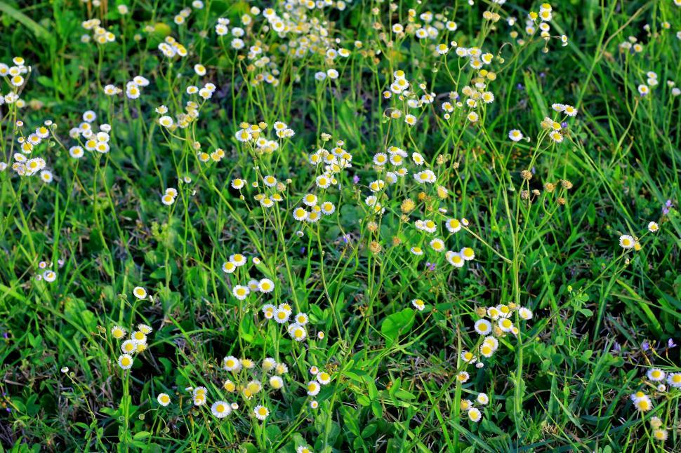 Download Free Stock Photo of Wildflowers