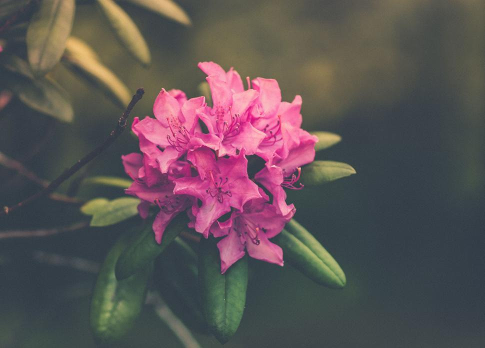 Download Free Stock HD Photo of Pink Flower - Blooming  Online