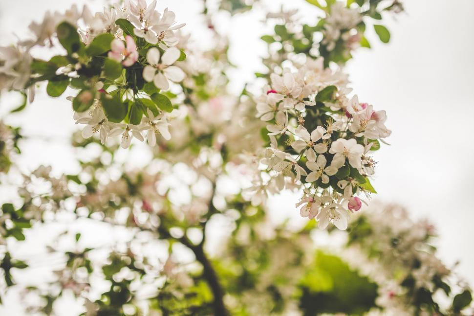 Download Free Stock Photo of Blooming Flowers on Tree