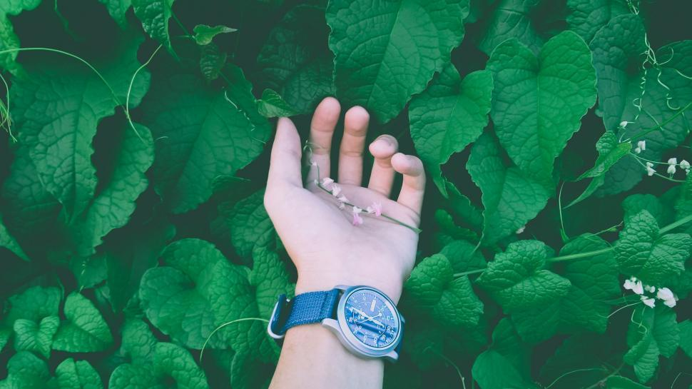 Download Free Stock Photo of Hand and Green Leaves