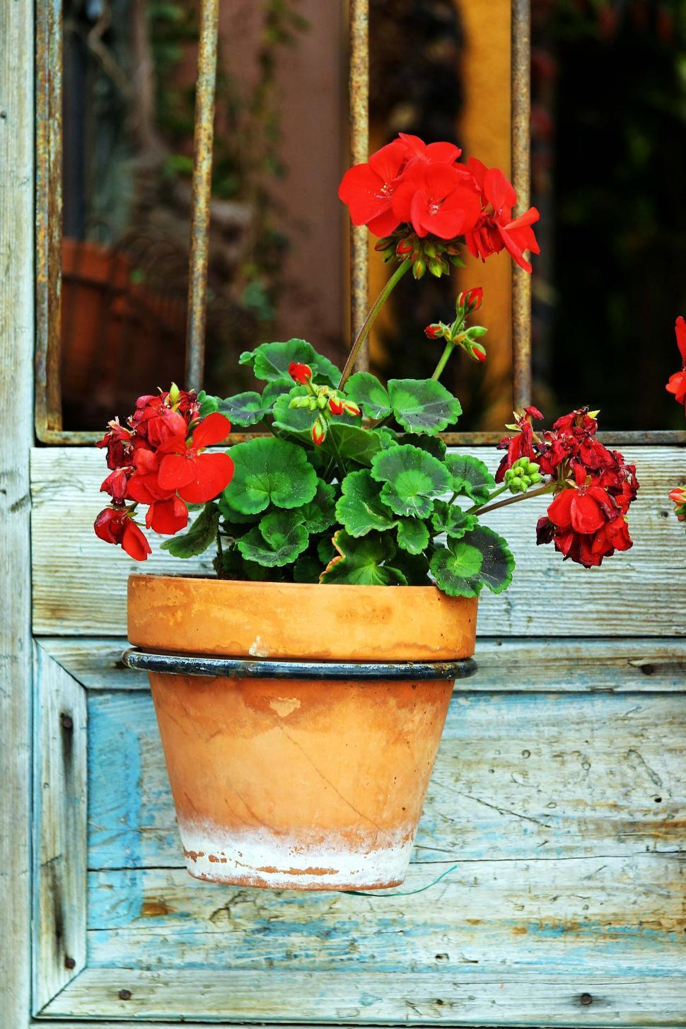 Download Free Stock HD Photo of Flowerpot in hanger Online