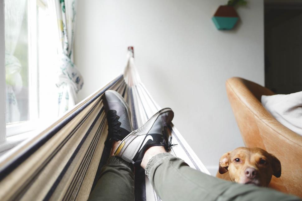 Download Free Stock Photo of Nike Shoes on Hammock with Dog