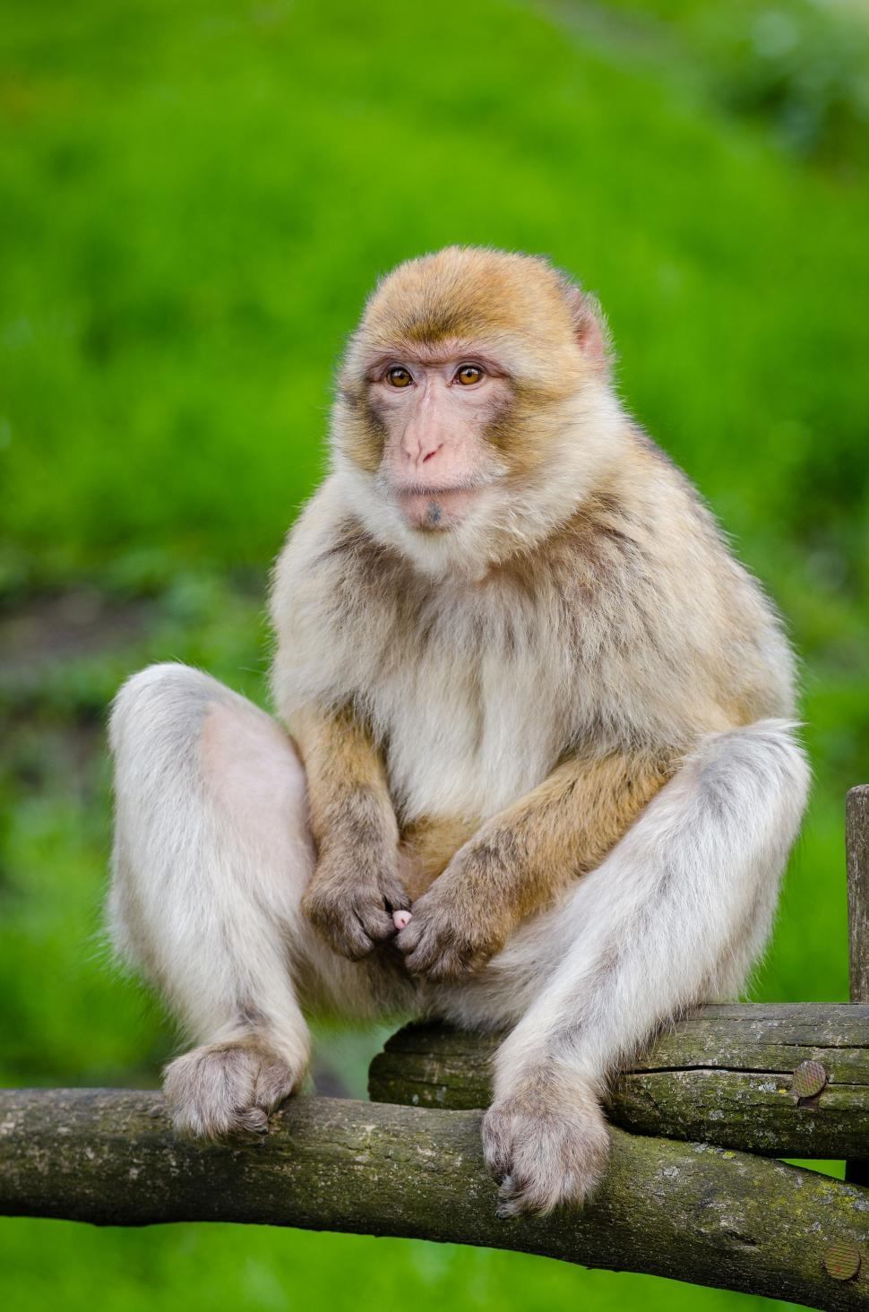 Download Free Stock Photo of Single Monkey