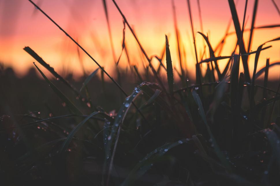 Download Free Stock Photo of Dewdrops and Grass