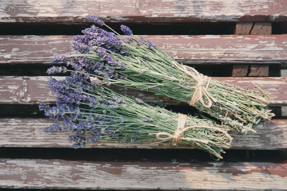 Download Free Stock Photo of Lavender Flowers