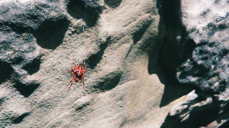 Download Free Stock Photo of Red Spider