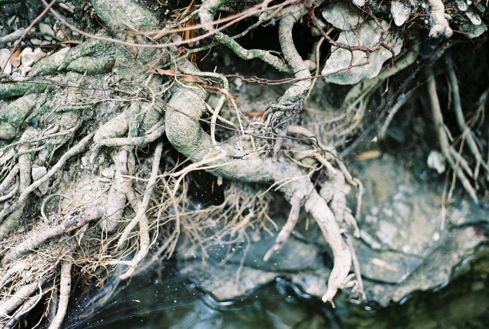 Download Free Stock Photo of Roots