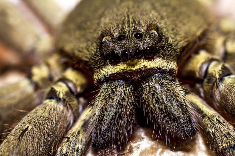 Download Free Stock Photo of Spider Fangs - Macro Photography