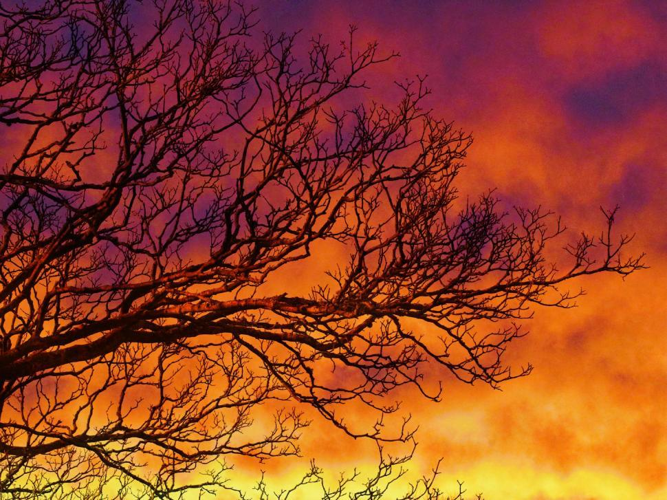 Download Free Stock Photo of Leafless tree with colorful sky