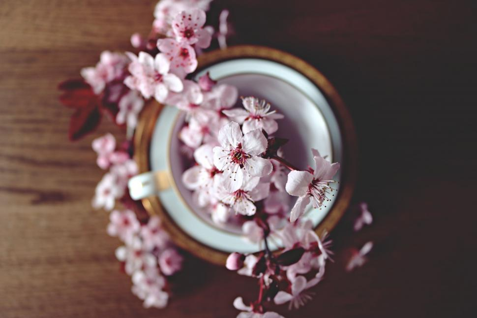 Download Free Stock Photo of Cherry blossom flowers