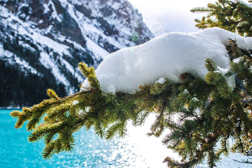 Download Free Stock Photo of Snow and pine leaves with Lake Louise - Banff National Park, Canada