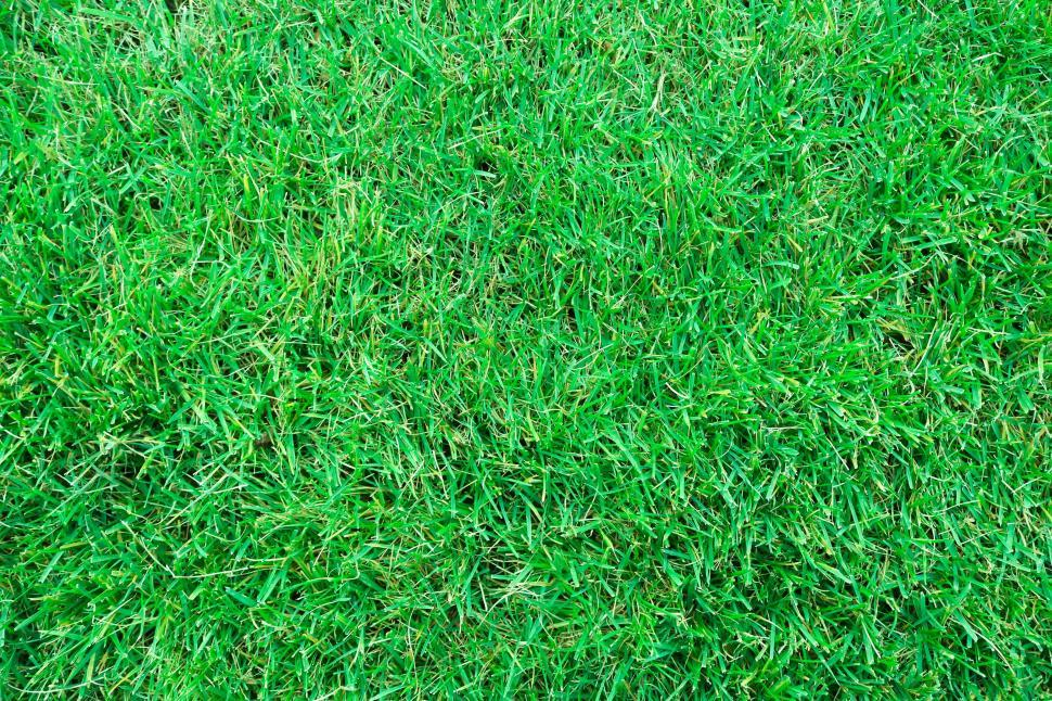 Download Free Stock Photo of Green Grass