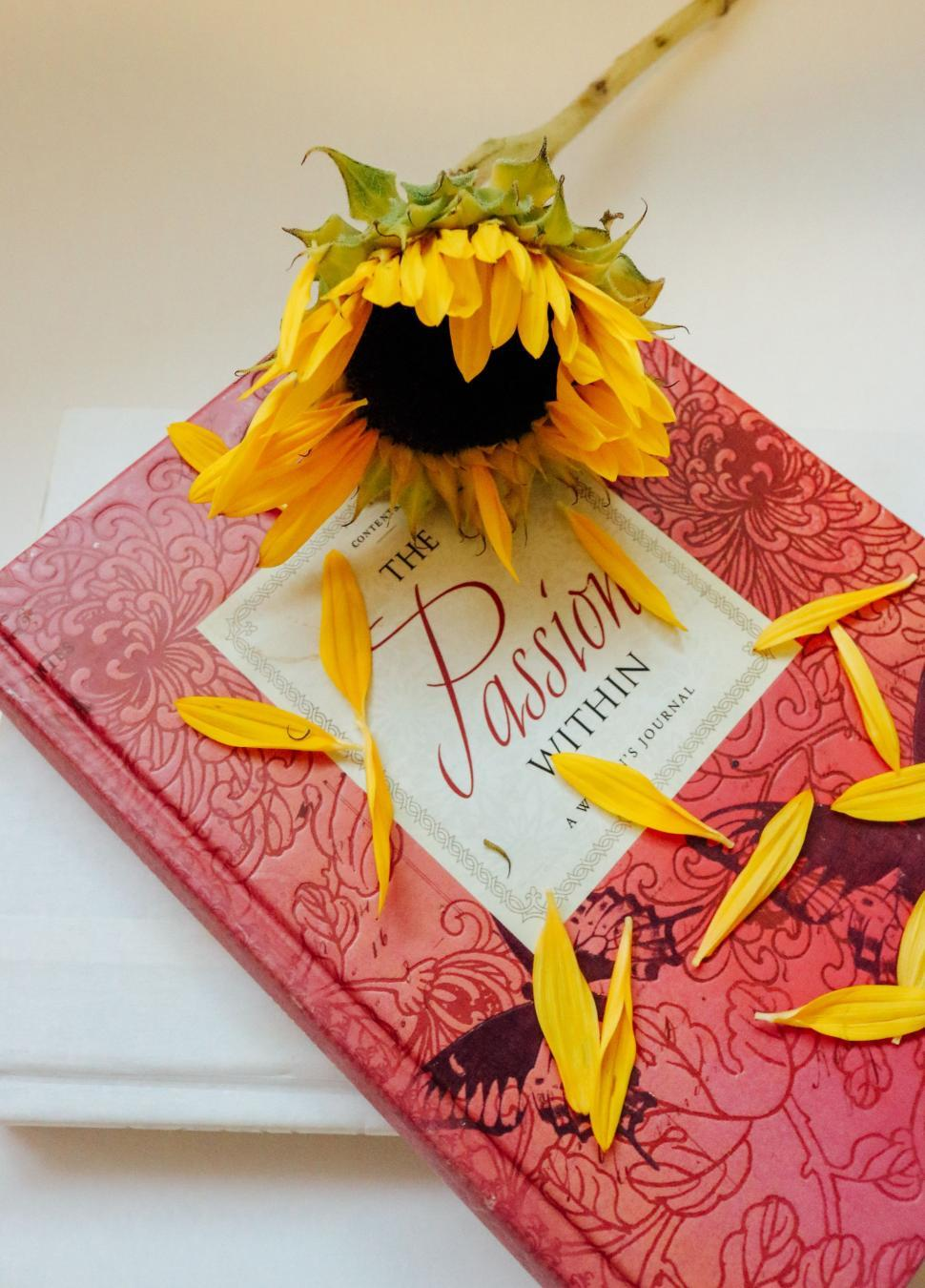 Download Free Stock Photo of Closed book with yellow flower petals