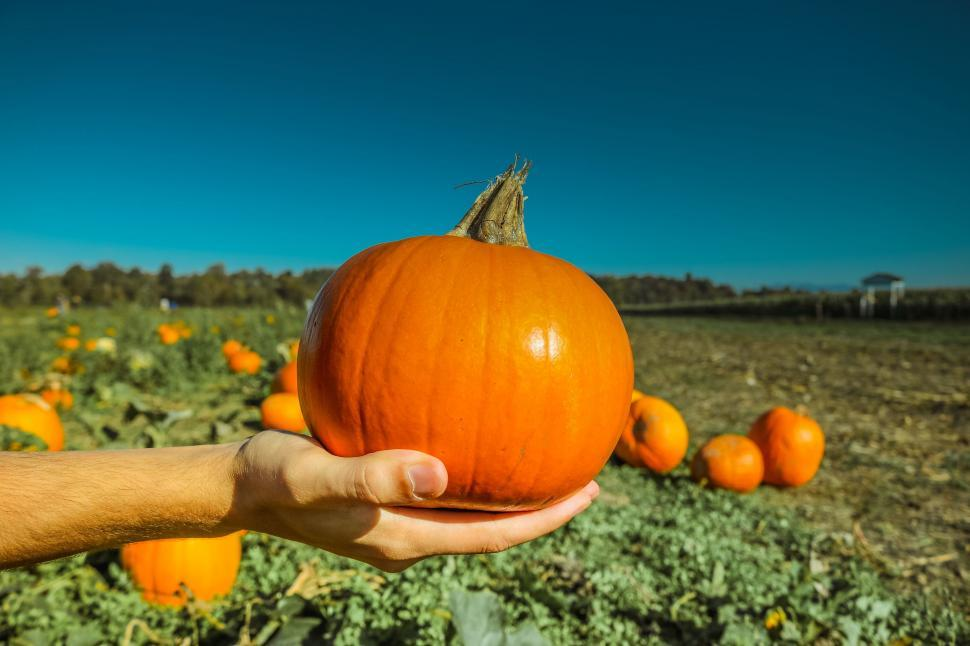 Download Free Stock Photo of Pumpkin in hand