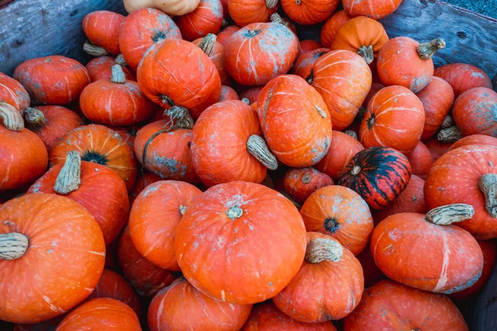 Download Free Stock Photo of Orange Pumpkins For Sale