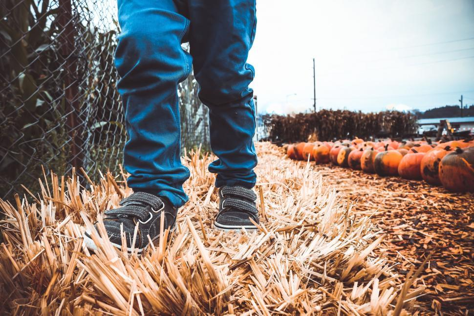 Download Free Stock Photo of Boy Legs and Pumpkins