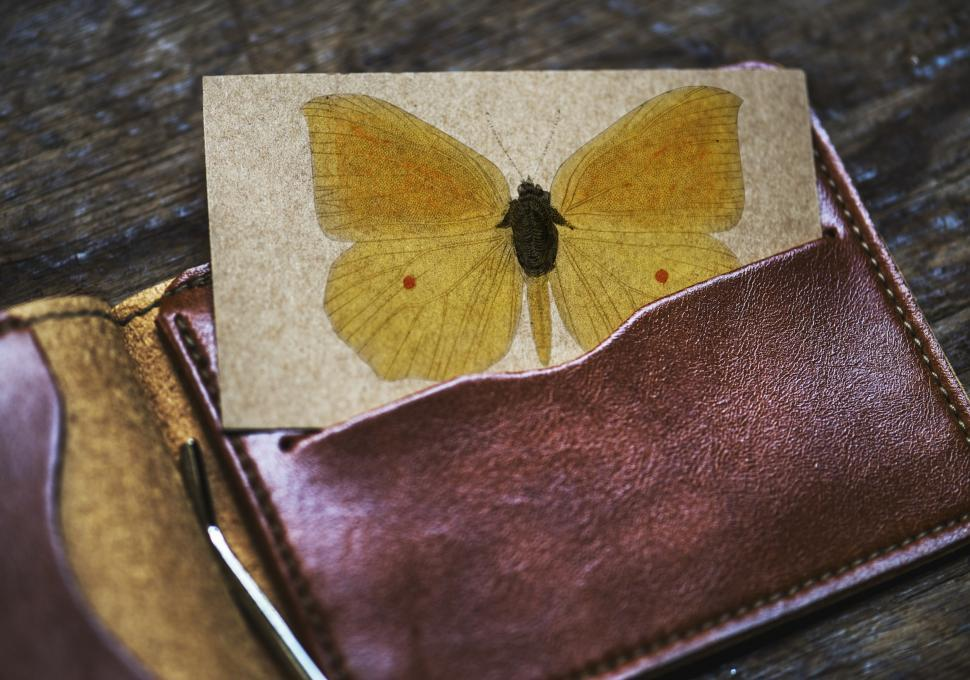 Download Free Stock Photo of A pressed butterfly picture half inserted into a wallet