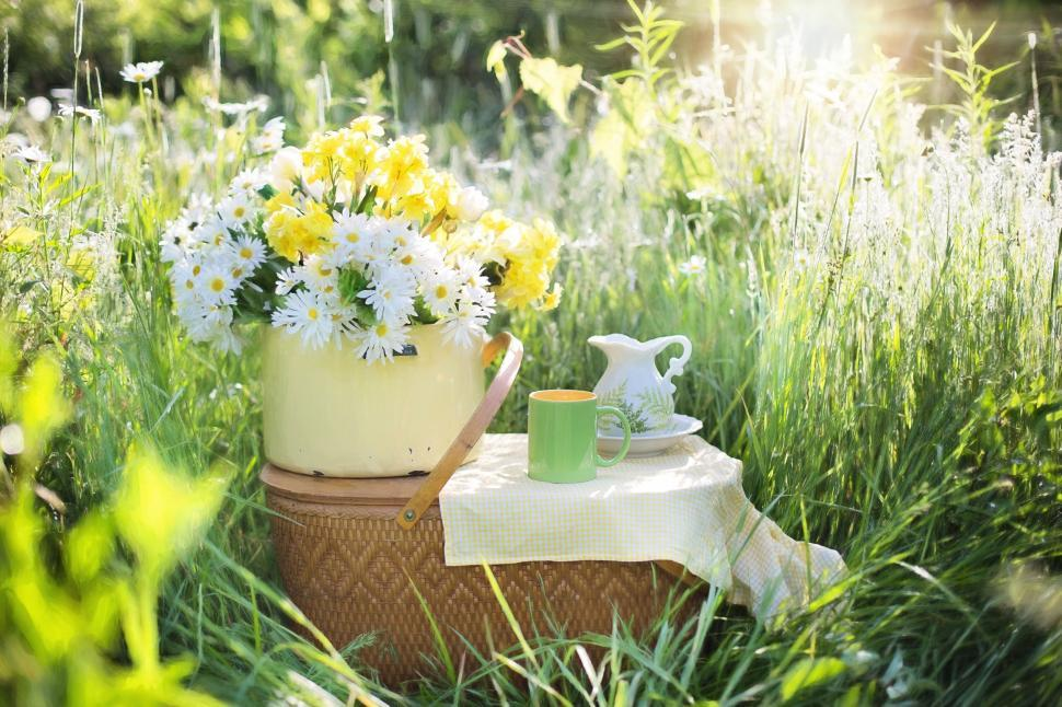 Download Free Stock Photo of Wicker Picnic Basket With Tea Cup in Daisy Field