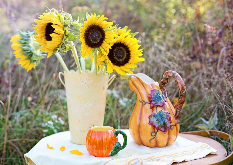 Download Free Stock Photo of Sunflowers with Pumpkin Shape Tea Cup