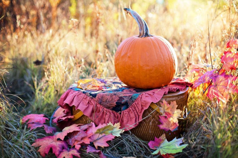 Download Free Stock Photo of Pumpkin and Basket in the meadow