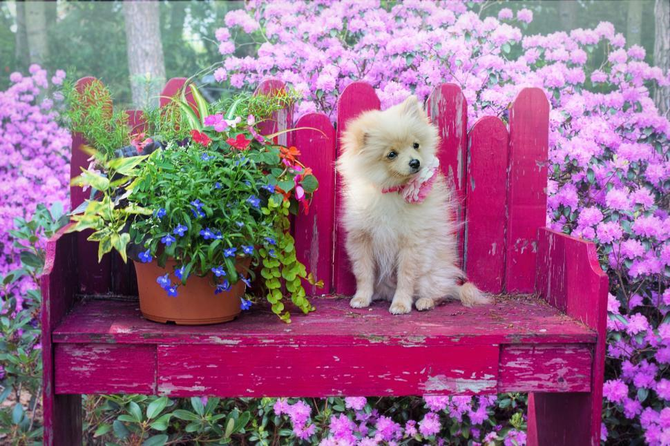 Download Free Stock Photo of Dog and Plant on Pink Table