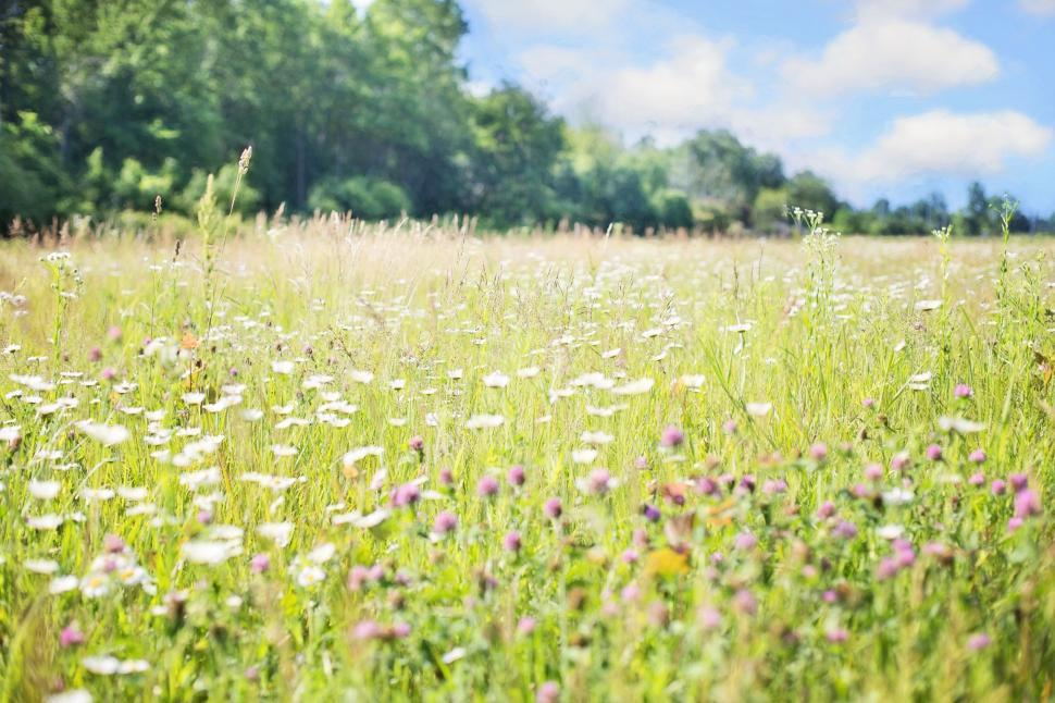 Download Free Stock Photo of Wildflowers Field