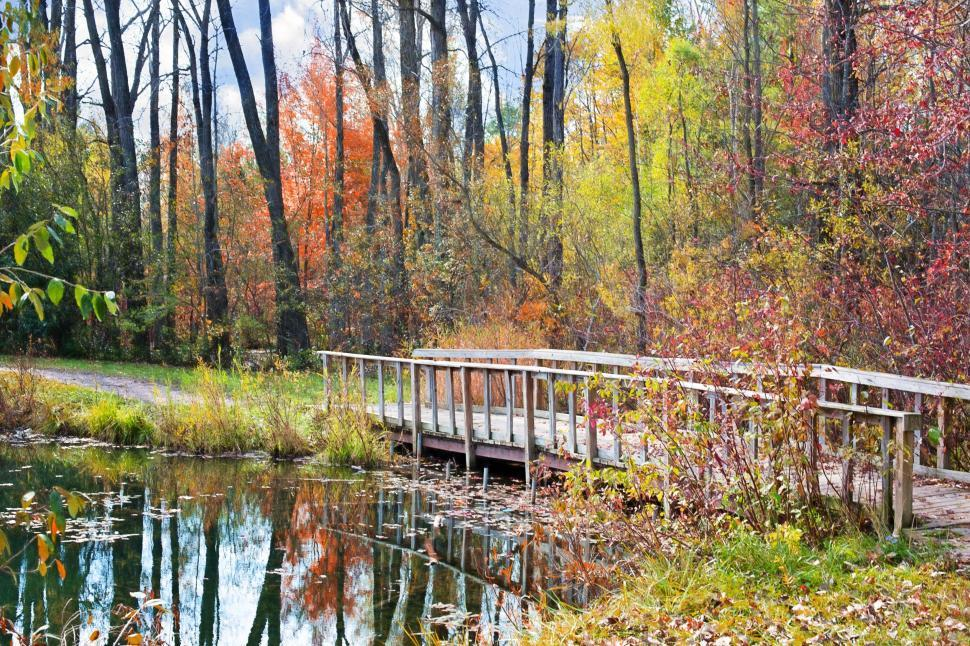 Download Free Stock Photo of Wooden Bridge And Pond In the garden