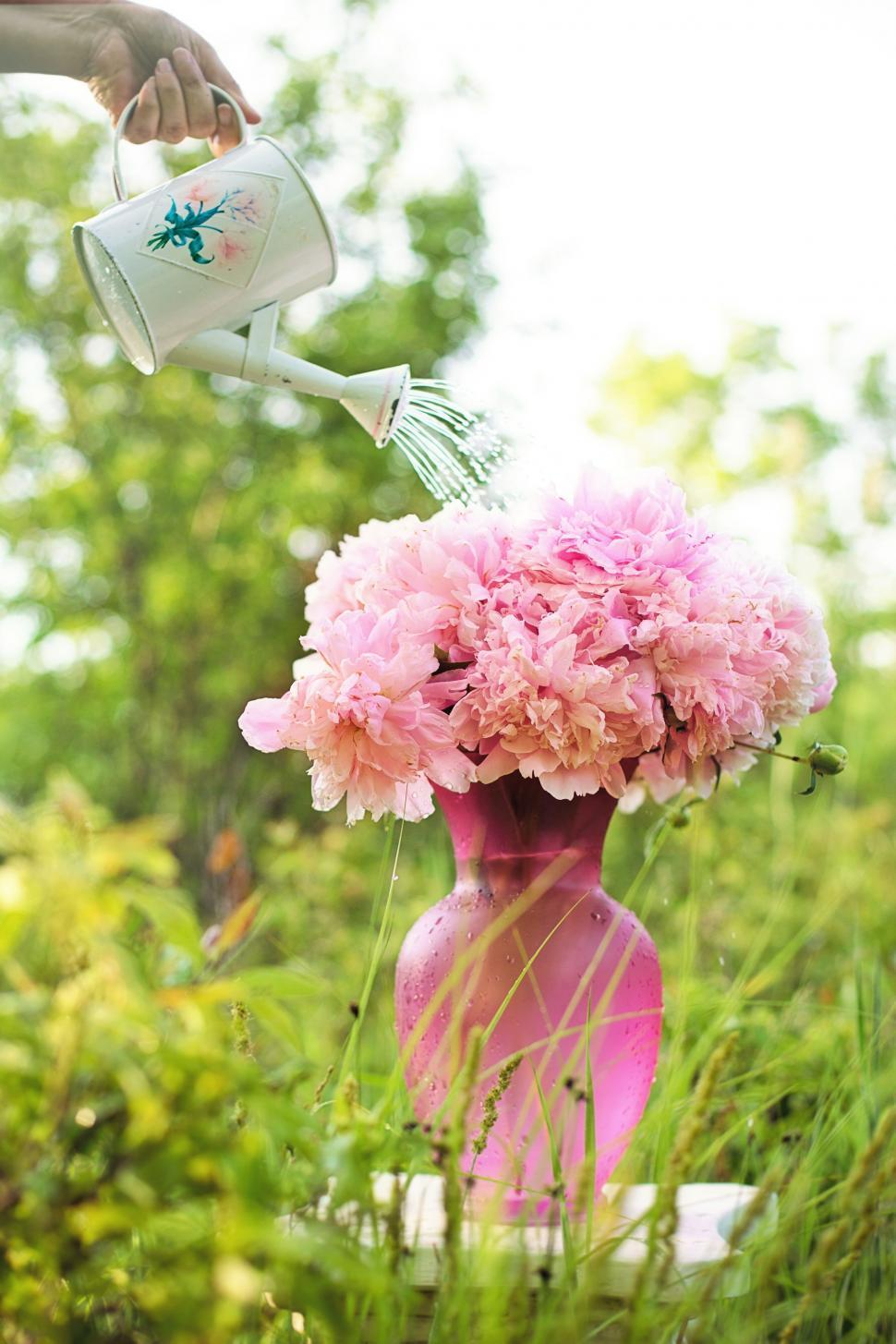 Download Free Stock Photo of Hand With Watering Can and Pink Flowers in Garden