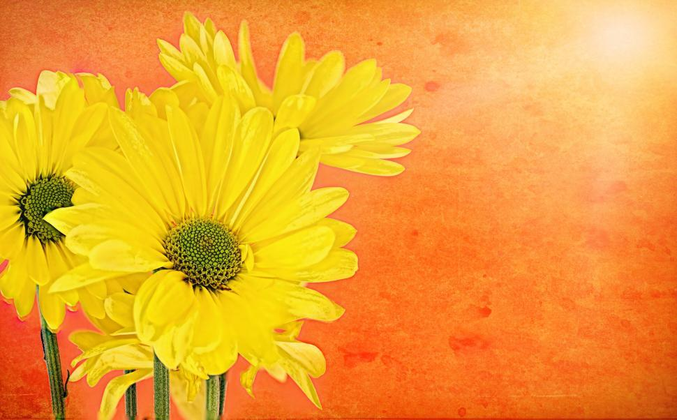 Download Free Stock Photo of Yellow Flowers - Painting