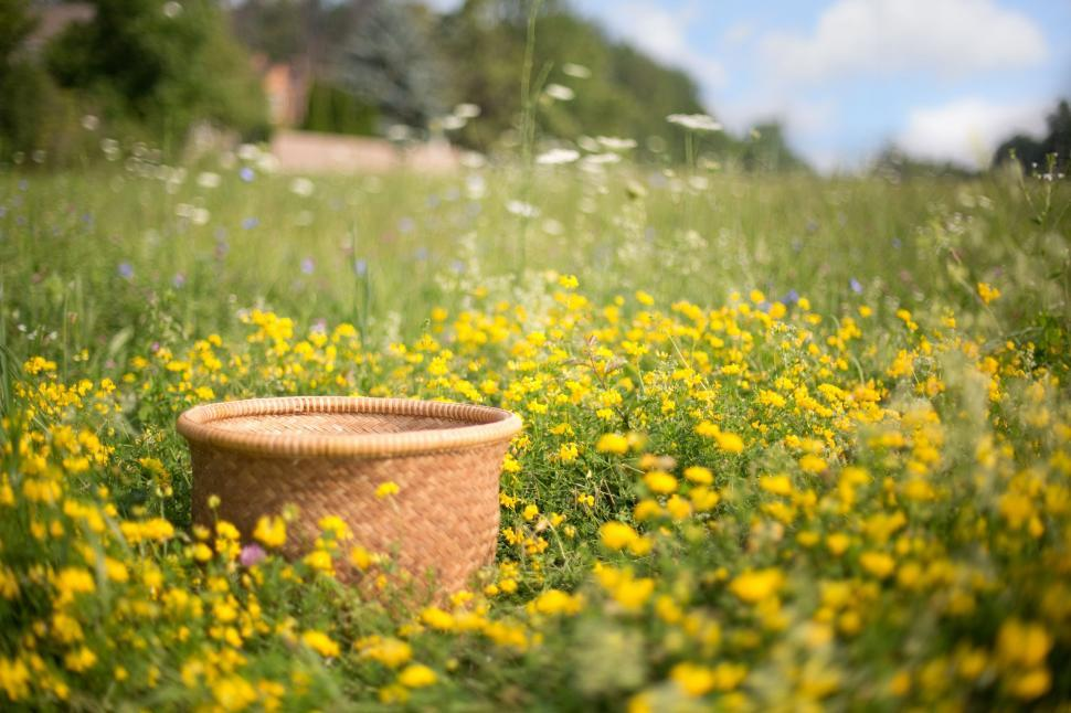 Download Free Stock Photo of Wicker Basket in the meadow