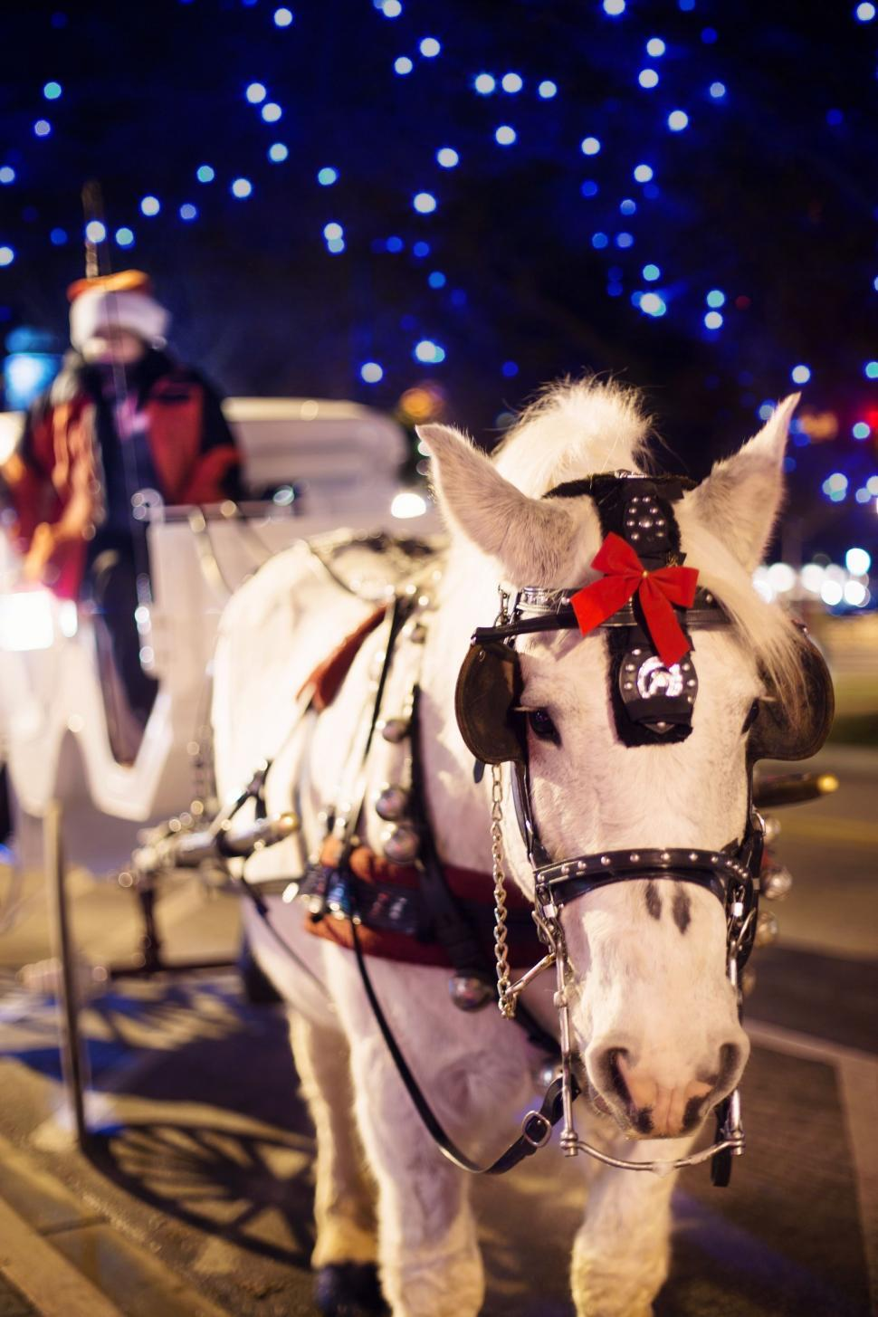 Download Free Stock Photo of Christmas horse carriage and bokeh lights
