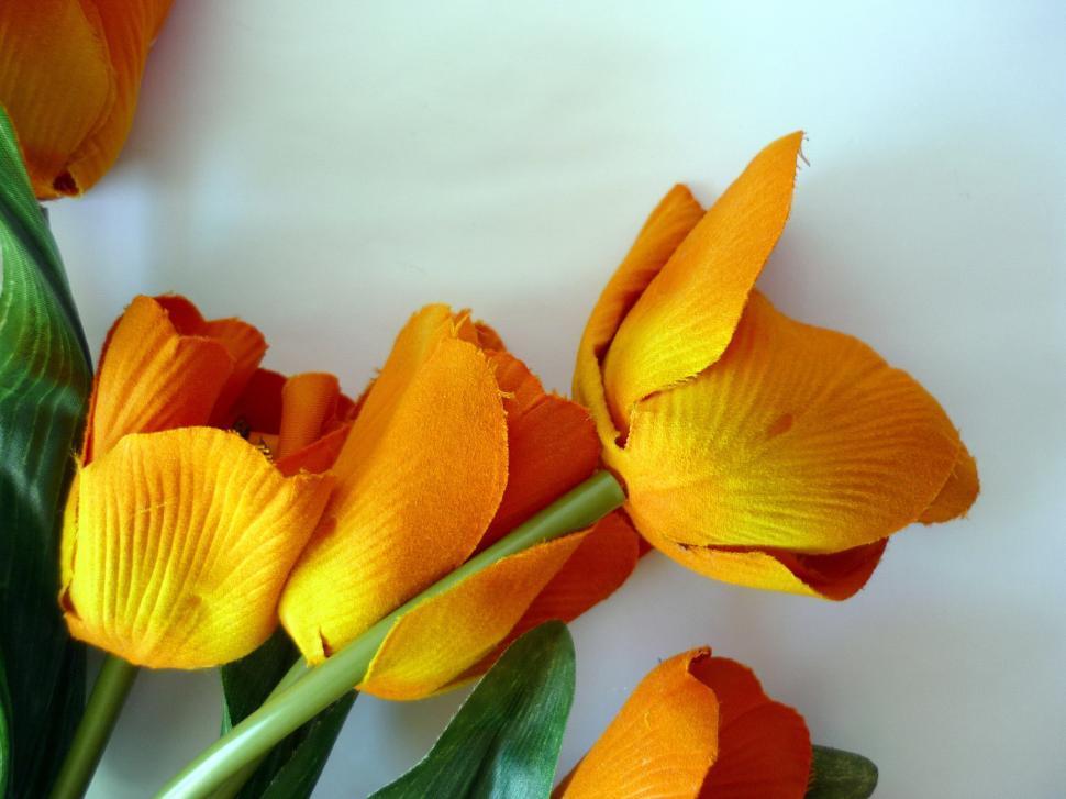 Download Free Stock HD Photo of Orange Tulips Online