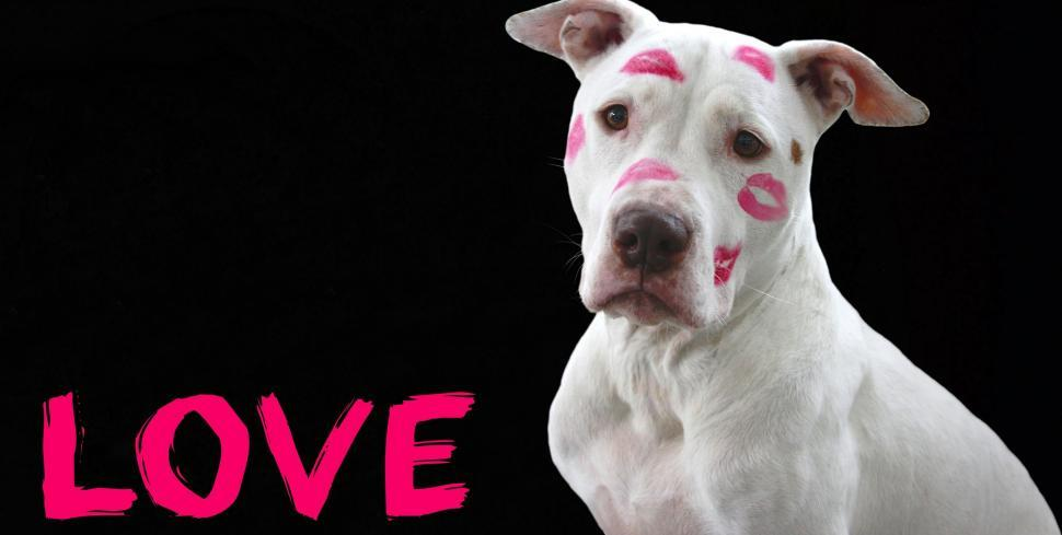 Download Free Stock Photo of Dog with Kiss Marks