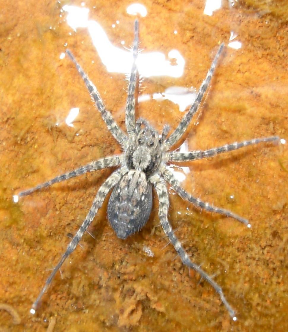 Download Free Stock Photo of Spider
