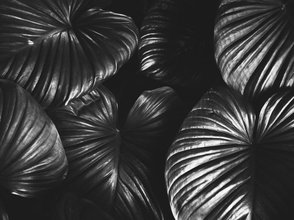 Download Free Stock Photo of Closeup of huge tropical plant leaves
